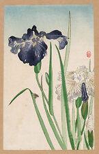 Japanese Flower Prints: Irisis: Fine Art Reproduction