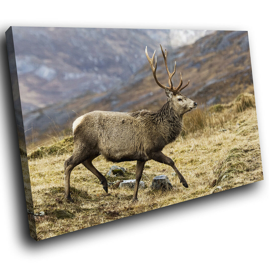 A515 Stag Deer braun Grass  Funky Animal Canvas Wall Art Large Picture Prints