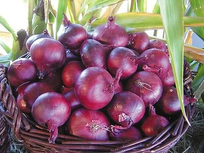 Vegetable - Onion - North Holland Blood Red - 200 Seeds - Economy