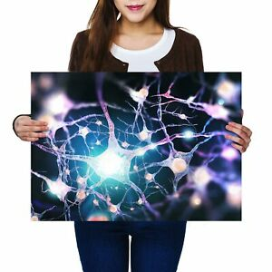A2-menschlichen-Nervensystem-Biologie-Poster-59-4x42cm280gsm-3366
