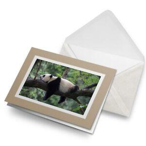 Greetings-Card-Biege-Lazy-Jungle-Panda-Bear-China-Wild-14849