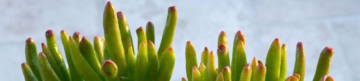 pluckyplants
