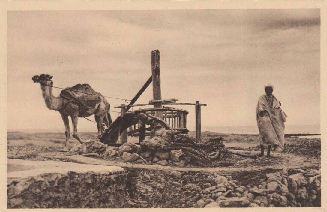 SCENES from A Noria, Camel and Owner, 1900-10s