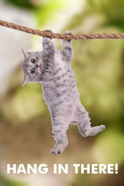 Kitten Hang In There Poster Fabric 8x12 20x30 24x36 E-3171