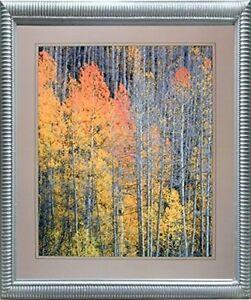 16x20 Forest Aspen Tree Wall Decor Art Print Poster