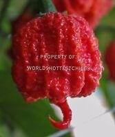 15x Carolina Reaper Seeds - Organic - World's Hottest Pepper