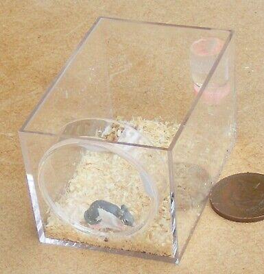 1:12 Mouse Scala In Una Custodia In Plastica Di Visualizzazione Tumdee Casa Delle Bambole Miniatura Pet-mostra Il Titolo Originale