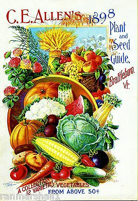 1898 C.E Allen/'s Vintage Flowers Seed Packet Catalogue Advertisement Poster