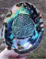 Large Rainbow Abalone Seashell Paua Green Sea Shell Smudging Beach House Decor on sale
