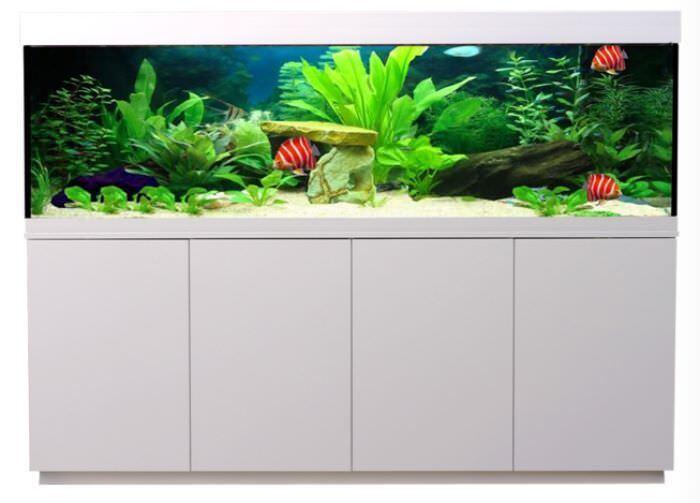 Pace montagna Acquario Combinazione Adam 130x60x70cm con led acquario, filtro