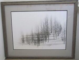 Winter Trees Steve Snyder Framed Black And White Ltd Ed Art