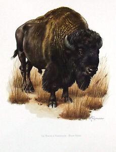 Impression Affiche Papier Histoire Naturelle Le Bison D'amérique Ofksrmum-07235206-823599011