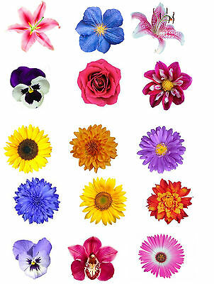 15 Beautiful Mixed Summer Flower Edible Wafer/Rice Paper Cupcake Toppers