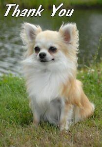 Chihuahua-Thank-You-Card-No-1-By-Starprint