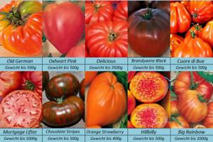 Tomatensamen-10-alte-grosse-Sorten-Gewicht-bis-3500g-Samen-Set-Paket
