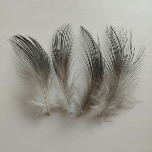 Wholesale 10-100pcs Rare 2-8 inches//5-20 cm Black Heron Silk Feathers Decoration