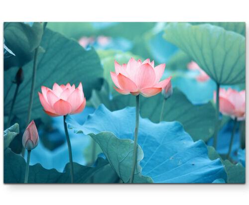 Leinwandbild Blühender Lotus