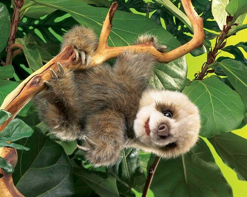 BABY SLOTH HAND PUPPET 2927  Adorable  Free Ship USA  Folkmanis Puppets