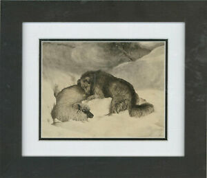 1885-Pen-and-Ink-Drawing-Heroic-Dog-Saves-Sheep-In-A-Blizzard