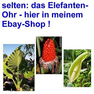 Samen Sämereien Balkon Terrasse Zimmerpflanze Saatgut i der KALEBASSEN-BAUM !i