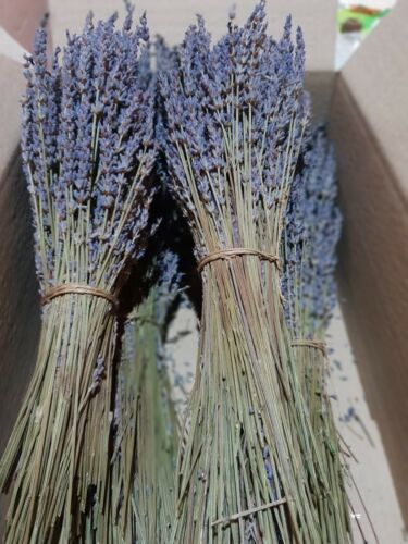 50g Flowers Organic Harvest 2020 Greek Dried Lavender Bunch and Buds 300 stems