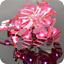 100-200-LED-Solar-Power-Fairy-Lights-String-Lamps-Party-Xmas-Deco-Garden-Outdoor thumbnail 14