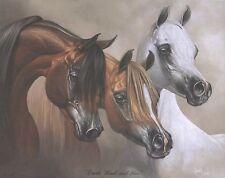 GRAY STALLION MARE colt halter bust filly arabian horse art print SHIVAK chill