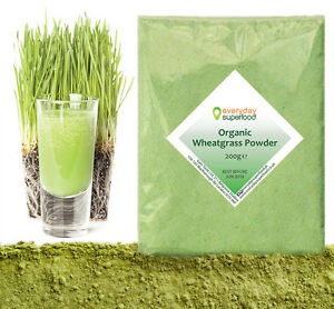 Organic Wheatgrass Powder Premium Organic Wheat Grass By