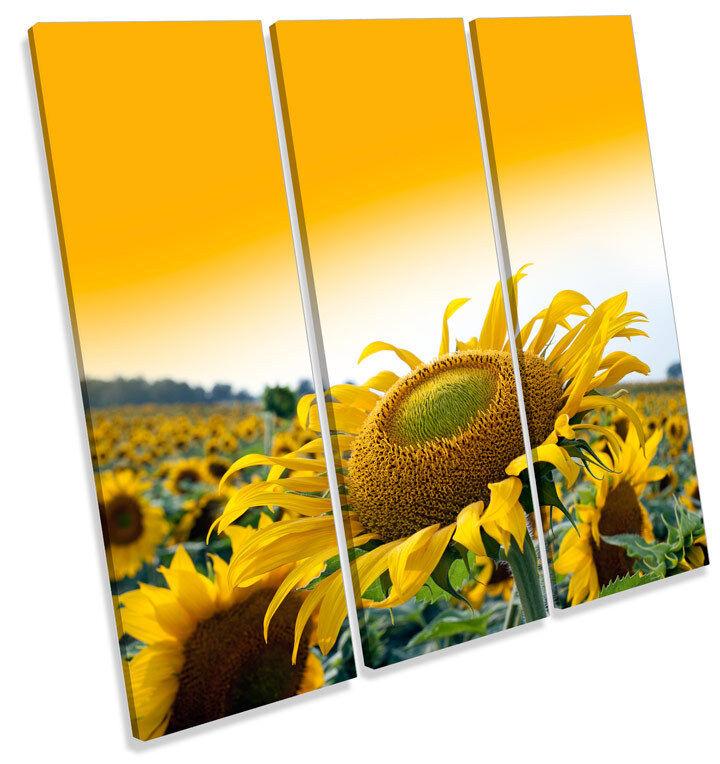 Puesta de sol de Girasol Girasol Girasol Flor LONA parojo arte Foto Cuadrado de agudos impresión 871024