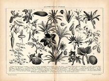Stampa antica botanica PIANTE ALIMENTARI frutta verdura 1910 Old print
