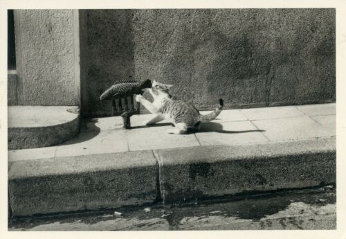 EDITIONS ADMIRA /& OLIVE// NAJA LE POISSON CHAT CAT CHAT POSTCARD CP