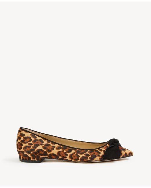 New w. Box Ann Taylor Camryn Leopard Print Haircalf (fits Bow Flats Sz 5 (fits Haircalf 5.5) d12005
