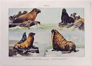 Seals: Original 1902 Dated Stone Chromo-Lithograph by Julius Bien & Co. Antique