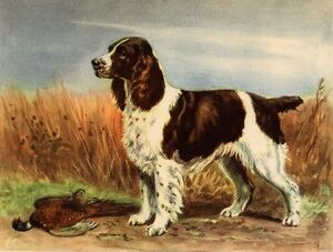 English-Springer-Spaniel-Dog-Art-Print-Megargee-MATTED