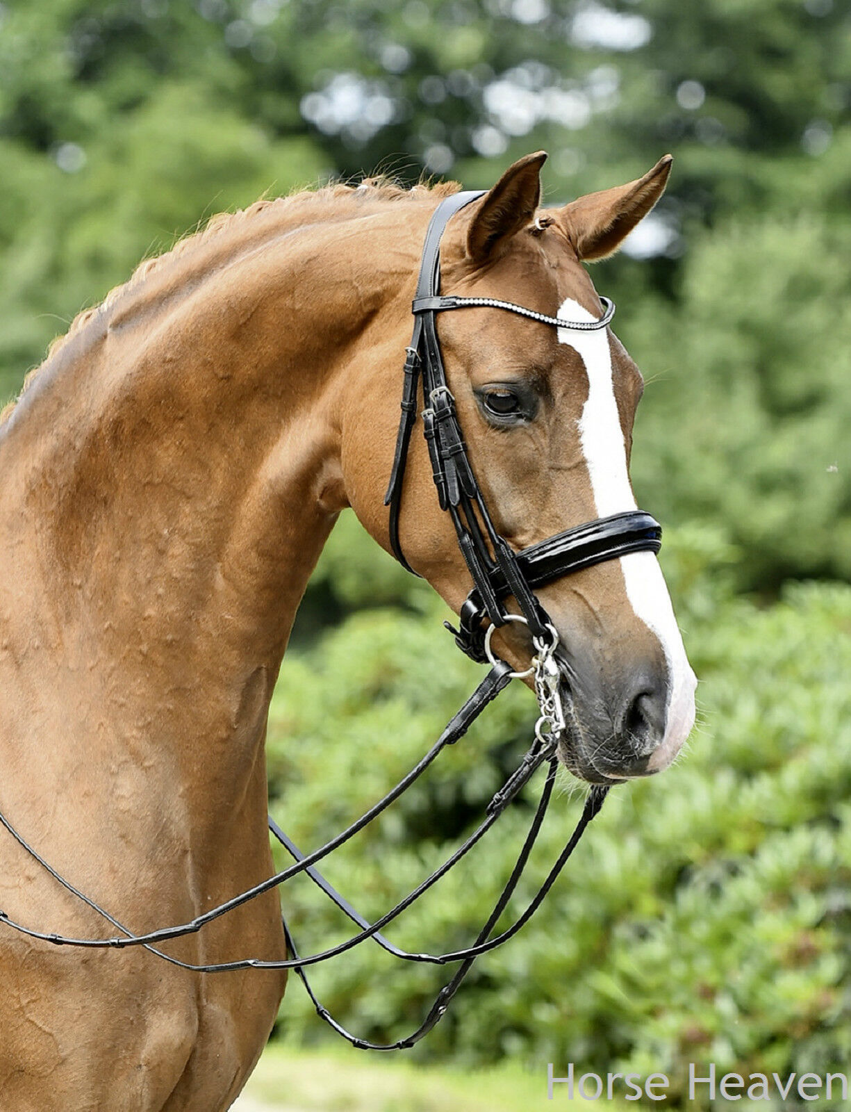 Busse Mailand Rolled Patent Double Bridle Dressage Weymouth Comfort Headpiece Headpiece Comfort ef6f5f