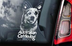 Australiano-Ganado-Perro-Coche-Ventana-Pegatina-Cattledog-Acd-Tabla-Firmar