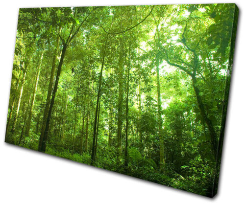 Landscapes Woodland Forest SINGLE CANVAS WALL ART Picture Print VA