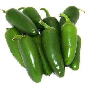 HOT-CHILLI-PEPPER-JALAPENO-EARLY-120-FINEST-SEEDS-CERTIFIED-ORGANIC