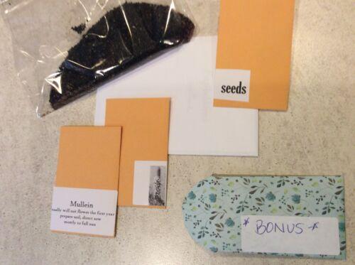50 Penstemon Beardtongue Seed