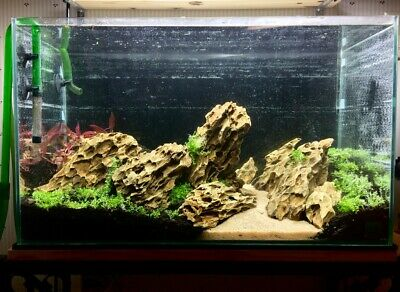 Natural Dragon Stone Rock Ornament Decoration Shrimp Tank Iwagumi Aquascaping Ebay