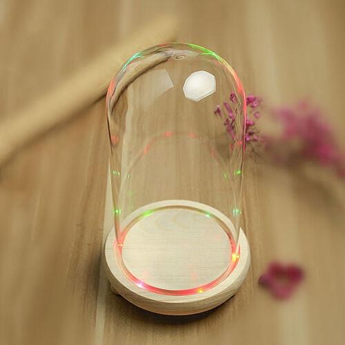 Glass Display Dome Cloche Bell Jar Wooden Base DIY Decor Flower Immortal Vase