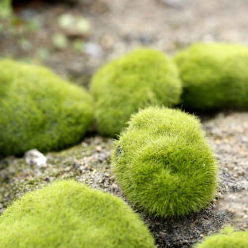 Artificial Moss Stones Grass Fake Rocks Mini Green Plant Landscape Home Garden