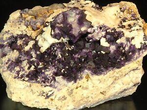 Large-Fine-Deep-Purple-Fluorite-Crystals-Fall-River-Nova-Scotia-Canada-RARE