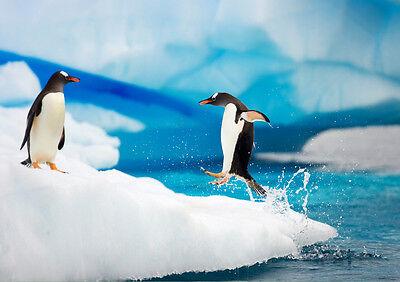 Nueva Moda Sticker Autocollant Poster A4 Animaux De L'antarctique . Les Pingouins-manchots