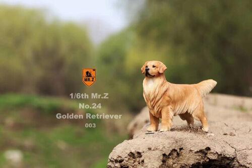 Mr.Z 1//6 Golden Retriever Dog Model Resin Animal Pet Display Figure Gift Collect
