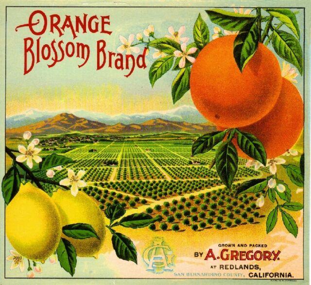 Redlands San Bernardino Orange Blossom GR1 Orange Citrus Fruit Crate Label Print
