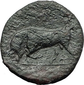 SYRACUSE-in-SICILY-HIERON-II-275BC-RARE-R1-Bull-Ancient-Greek-Coin-i58784