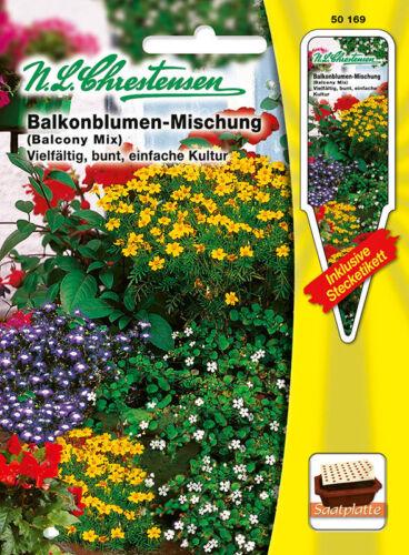 Balkonblumen Mischung Saatplatte 80 cm lang vielfältig bunt einfach 50169