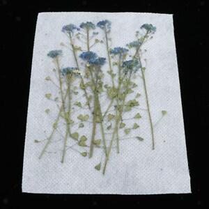 1-Pack-Real-Press-Dried-Flowers-Leaves-DIY-Epoxy-Resin-Jewelry-Making-Crafts