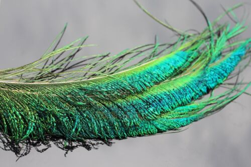 12 pcs Peacock Sword Tail Herl Feather for Nymphs Wet Flies Classic Fly Tying